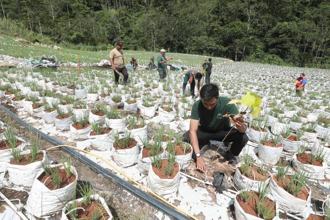 JPNP tanam 700 pokok di kawasan Op Bertam