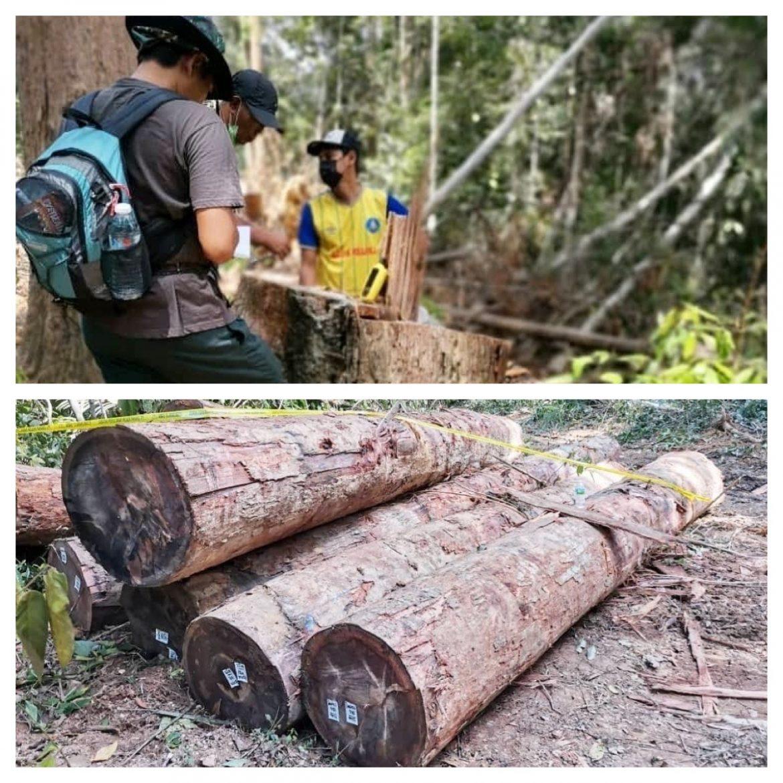 Sindiket curi balak di Hutan Simpan Jengka tumpas