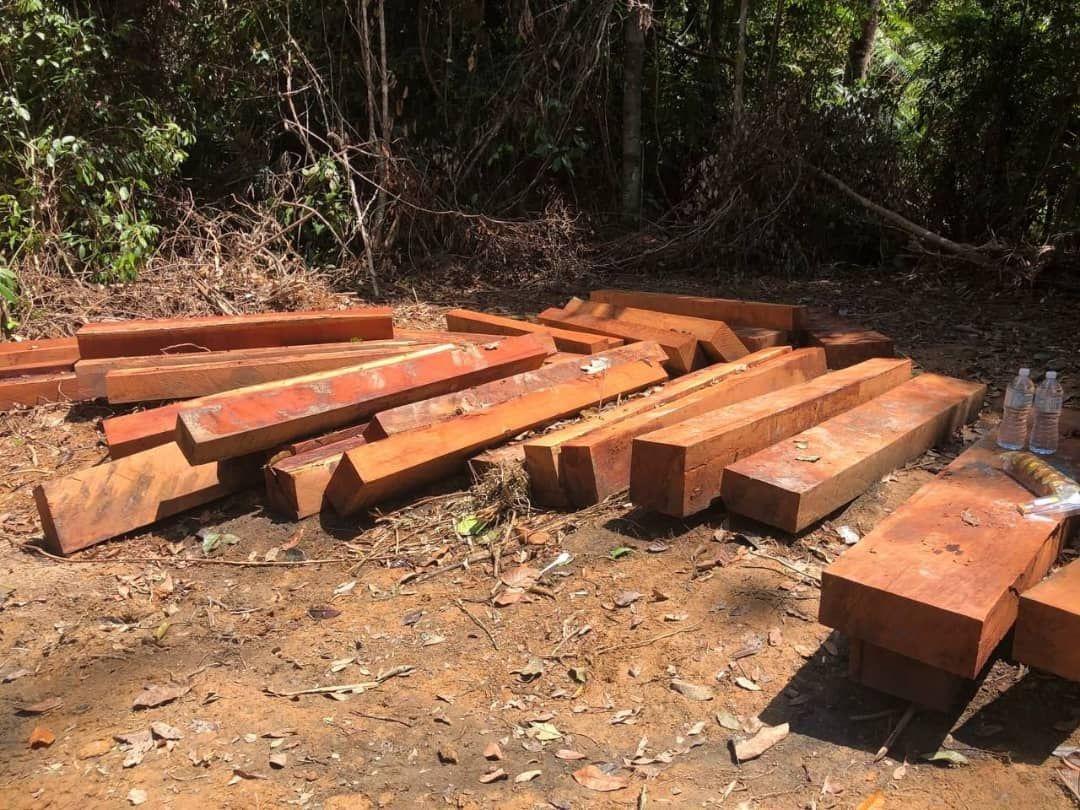 Cubaan empat lelaki pindah kayu merbau di hutan Taman Negara gagal
