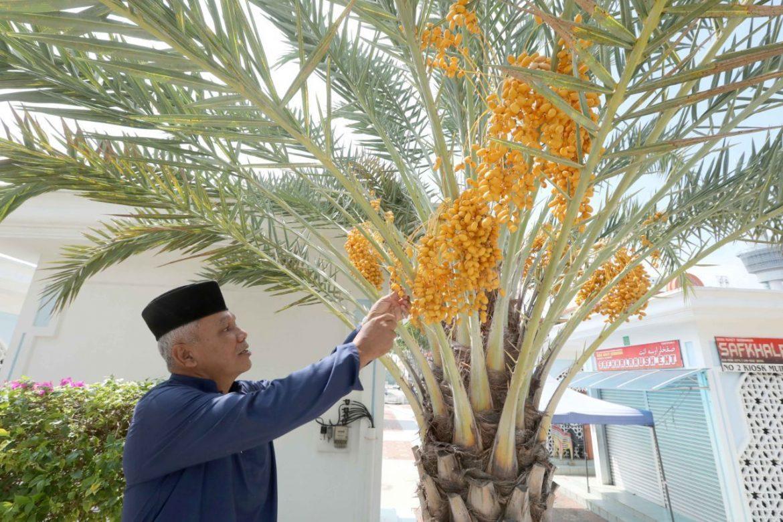 Lebatnya kurma di Masjid Negeri Sultan Ahmad 1