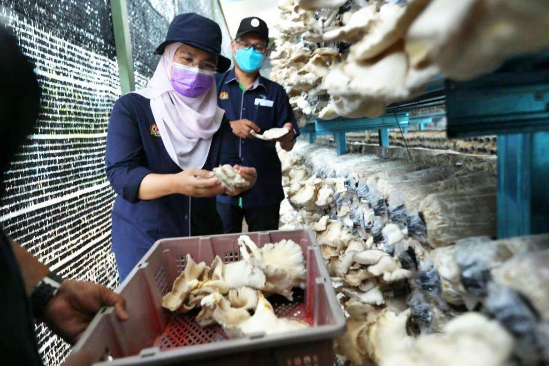 Pahang bakal pengeluar utama cendawan tiram